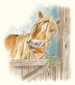 2-Conny Pony mit Karotte